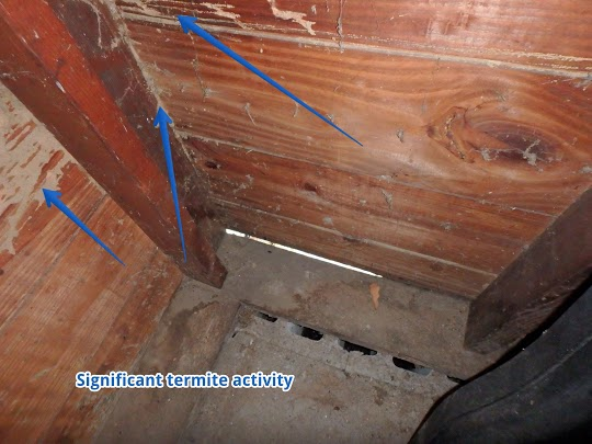 Shelton CT Newtown CT Termite Inspection